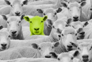 Green Sheep LimeGreen Marketing